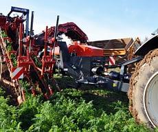 Carrot harvester GK II S