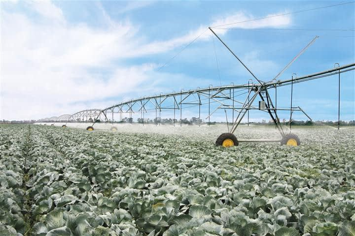 APH Group irrigation - T-L Pivot on a field of Brassica